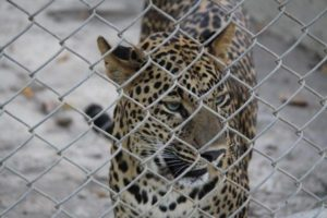 sakkarbaug_zoo_junagadh
